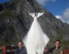 © www.lofoten-fishing.de